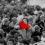 The battle of Algiers – Η ωμότητα του πολέμου – Gillo Pontecorvo
